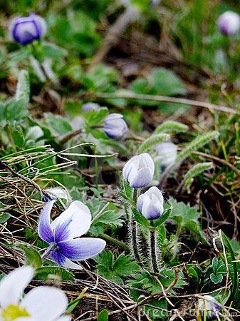 Esencias florales del Himalaya